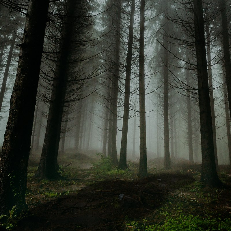 sombra-y-bosque
